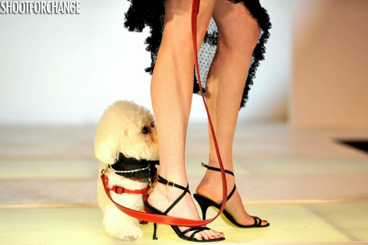 fashion for paws, stef woods, walter grio